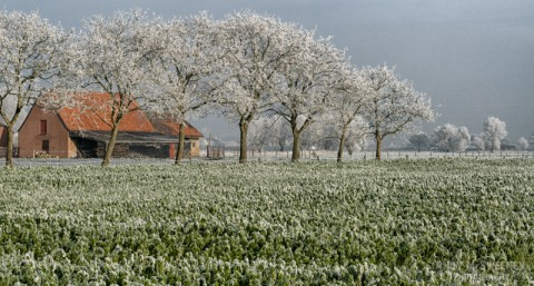 Landscape of farmhouse with farmland and trees covered in frost during winter in Brugge, Belgium
