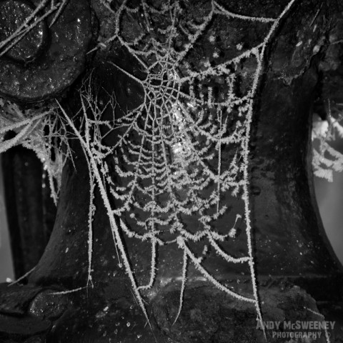 Black and white detail of a cobweb covered in frost during winter in Brugge, Belgium