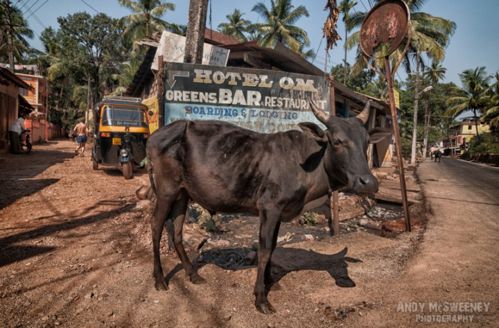 Street with riksja, old sign, people and posing cow in Gokarna, South-India
