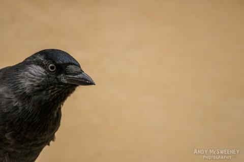 Close-up of Roofie The Bird in Brugge, Belgium