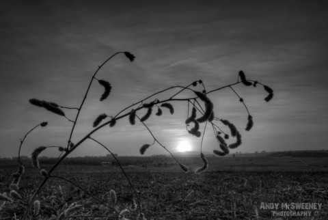 Black and white landscape with branch during the sunset over the field in Bylakuppe, India