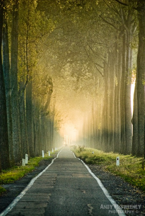 Foggy road and symmetrical trees along the canal from damme, in Brugge, Belgium